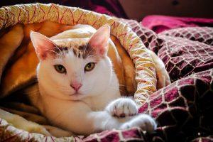 cat-1513184__480