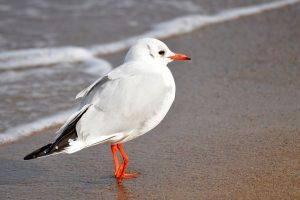 seagull-1251001__480