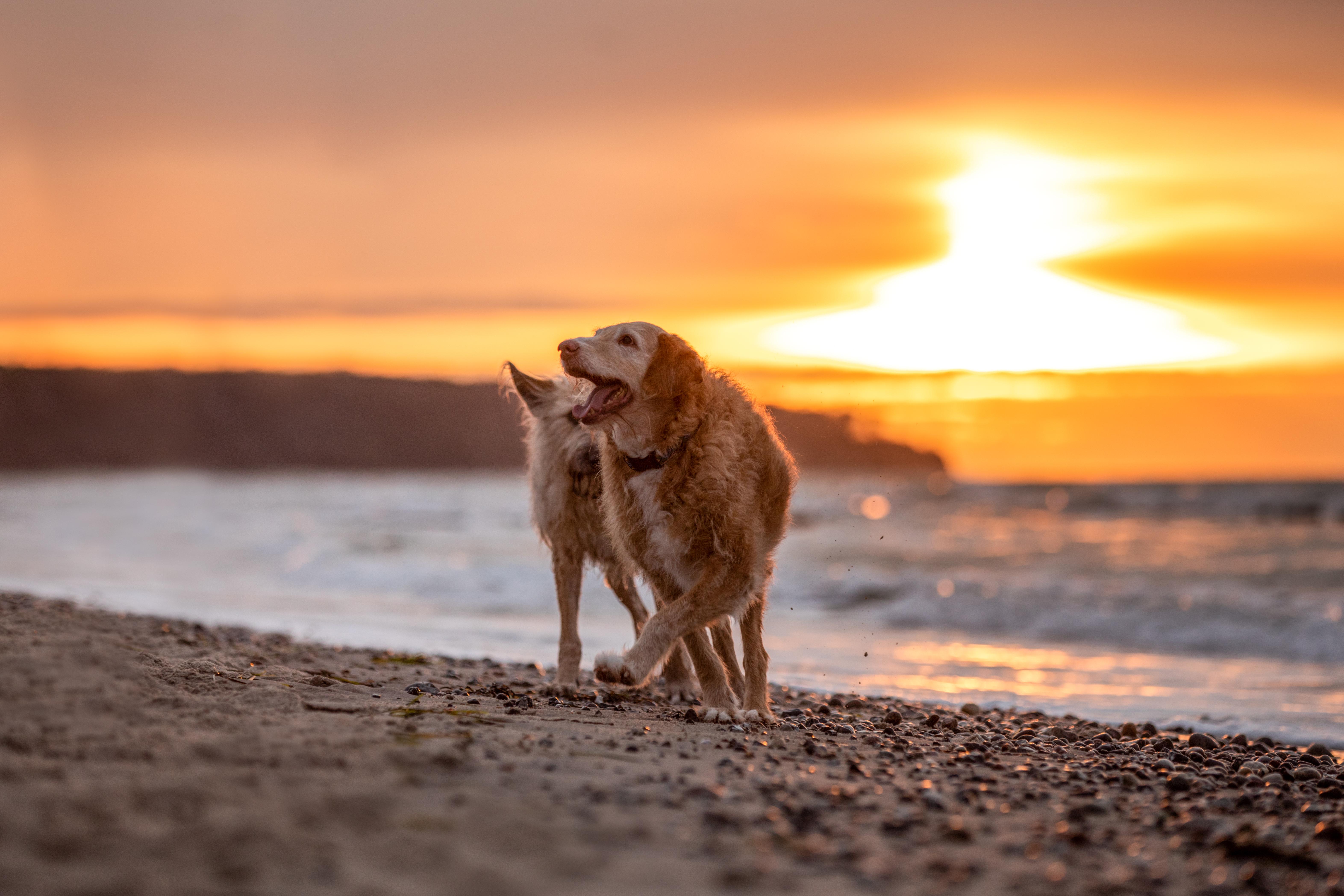 Entdecke die Magie in deiner Mensch Tier Beziehung