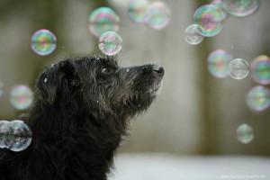 hund-bubbles