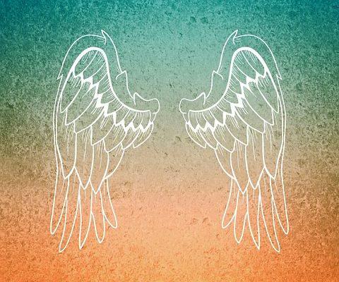 wing-744566__480