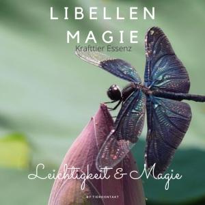 Libellen Magie